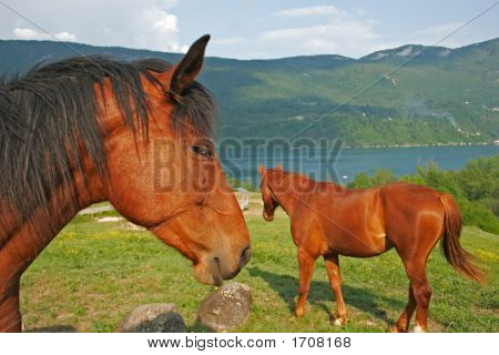 Two horses in foreground with a lake in bottom poster