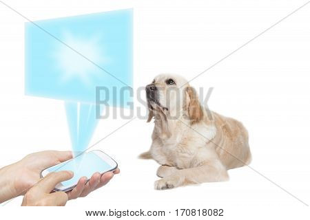 Golden Retriever Dog lying with its front paws crossed and is looking up at a blank screen transparent rectangle based on the smart phone held by female hands in the bottom of the photo.