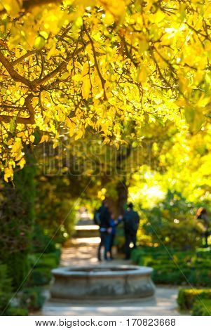 Warm afternoon & bright yellow thorn bush, de-focused active family people & small circular stone fountain in background, sunshine & nature in Madrid's city garden park.