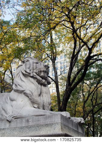 An iconic lion statue guards the New York Public Library in downtown Manhattan as the leaves change color in autumn.