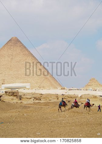 A row of camels bearing tourists walk past the great pyramids of Giza in Cairo Egypt.