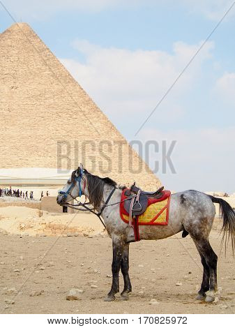 A horse stands waiting for tourist riders near the giant pyramid of Giza in the desert outside of Cairo Egypt.