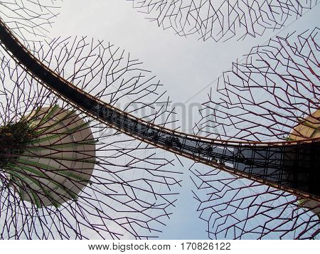 Solar-powered supertrees at Singapore's Gardens by the Bay.