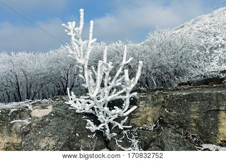 Beautiful branch covered with snow on a blue sky and forest.
