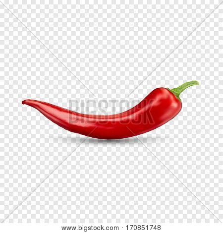 Red hot natural chili pepper pod realistic image with shadow vector illustration. Design for grocery, culinary products, seasoning and spice package, recipe web site decoration, cooking book.