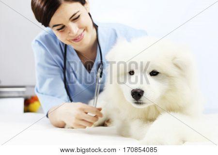 smiling Veterinarian examining dog on table in vet clinic