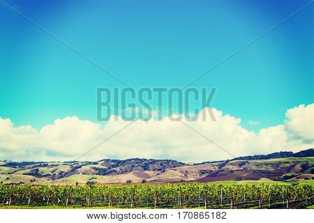 a vineyard in southern California in USA