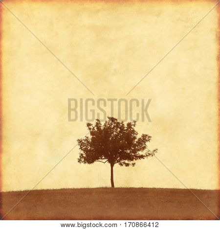 Lonely tree on grunge background.