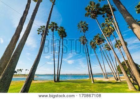 Palm trees in San Diego shoreline California