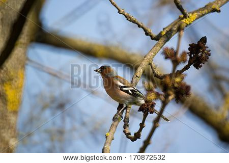 Bird with a bug in its beak on the tree