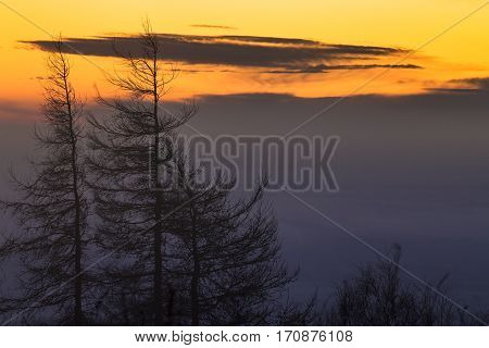 Spruce Trees Silhouette on Dawning Sky Background