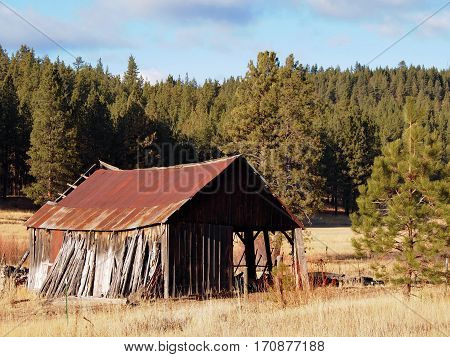 An old barely standing building on a farm in the Ochoco Forest in Central Oregon with a rusted roof and wooden leaning walls.