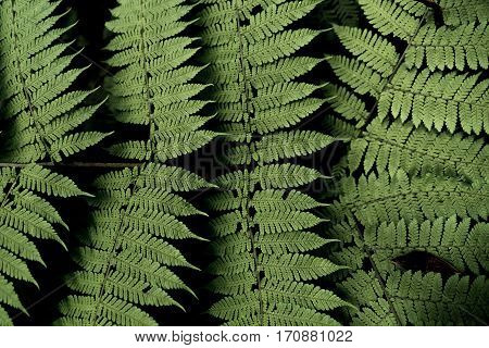 Image of a green fern pattern in the jungle.