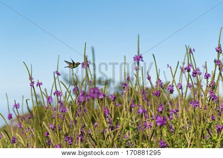 Image of a hummingbird in a garden of flowers.