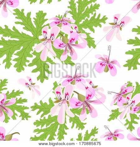 Rose Geranium theme. Seamless pattern vector. Elegant and vivid. Pelargonium Graveolens. Blossoming pink flowers on a green branch. for poster, spa, cosmetics, health care, prints, textile, decoration