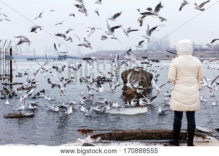Odessa, Ukraine - February 2, 2017: White Swans, Wild Ducks And Gulls Swimming In Sea Water In Winte