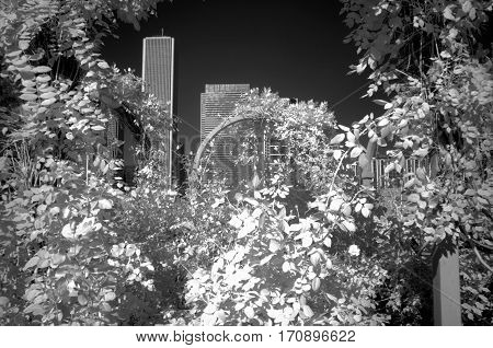 flower arbor with skyscrapers in the background under a clear sky infrared photography black and white