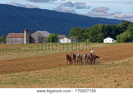 MILROY PENNSYLVANIA - September 2 2016: A team of horses pull a spring-tooth harrow with soil rollers on an Amish farm in Mifflin County Pennsylvania.