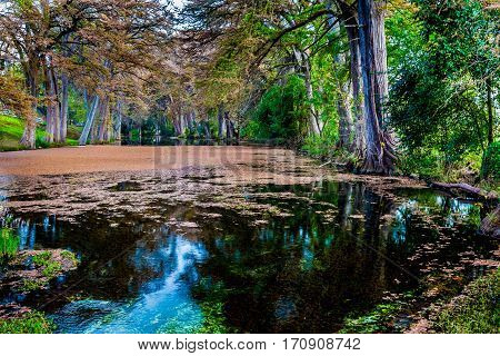 Different Vivid Colors of Fall Foliage From the Trees Lining the Crystal Clear Frio River in Texas.