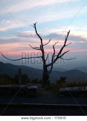 Nature Scenic Tree