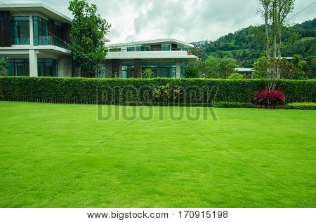 Front lawn landscaped lawns and gardens. planted trees for a green fence.