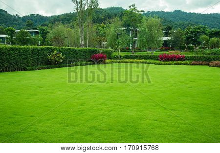 Green lawn with trees planted trust for a fence, landscape design, garden. The background is green mountains.