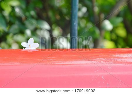 wild water plum flower drop on red postbox