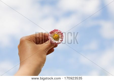 Woman hand holding a Daisy against of the blue sky with clouds. Freedom, peace, hope, trust and purity concept. poster