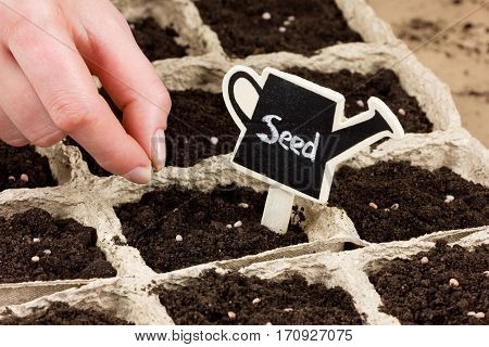 Woman hand planting seed in the ground or soil. Spring sowing. Gardening concept.