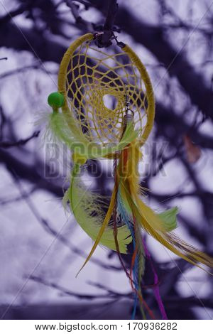 ancient magic amulet dream catcher out of colorful feathers growing on the branches of the tree