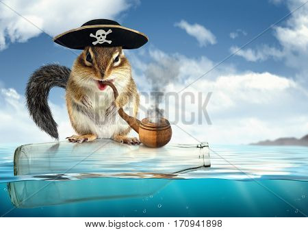 Funny drifting animal pirate , chipmunk filibuster