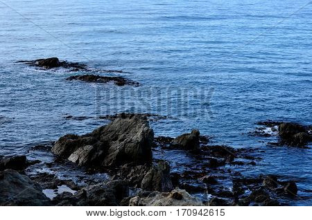 Seals on rocks and in the water in Kaikoura, New Zealand
