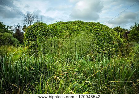 Beautiful framework covered by vegetation close-up photo.