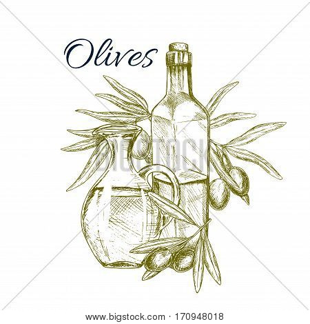 Olive fruit and oil sketch poster. Olive oil bottles, decorated by olive tree branches with fruits. Olive farm, food packaging, mediterranean cuisine recipe, healthy vegetarian nutrition design