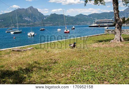 TORRI DEL BENACO, ITALY - MAY 4, 2016: Shore of the Lake Garda in the village of Torri del Benaco in Italy