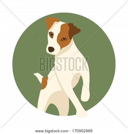 Jack Russell dog vector illustration style Flat