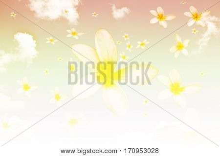 Abstract blossoms falling from the blue sky,Frangipani flower (plumeria)