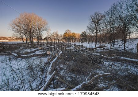 destruction of trees in the forest in winter