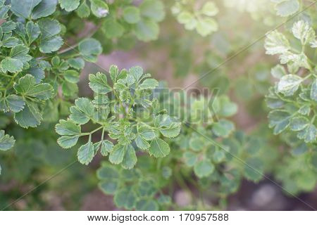 Top leaves weakens background Lifestyles Nature Green