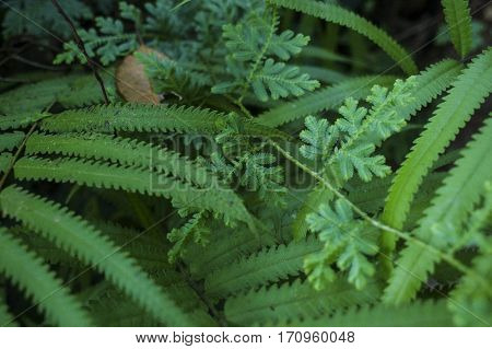 green carved leaves of grass, beautiful backgrounds, close-up