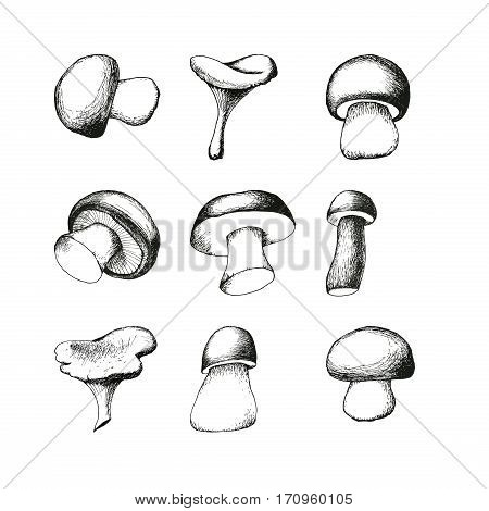 Set of nine hand drawn mushrooms. Vector black and white doodle sketchy illustration. Boletus, chanterelle, agaric and russala.
