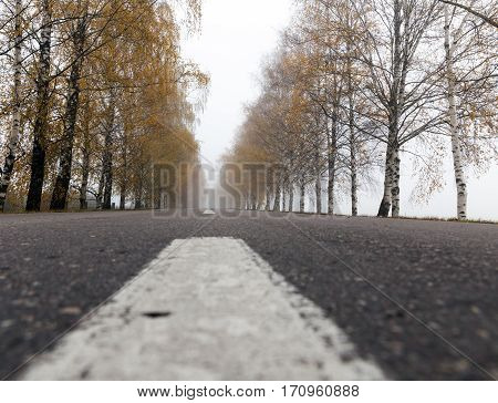 old asphalt road in the autumn season. on the roadway visible white markings. On the side of bare birch trees grow. Photo taken closeup. Small depth of field. The photo was taken from the bottom