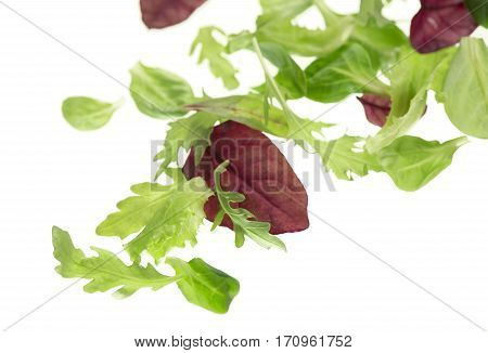 Salad leaf. Lettuce isolated on white background