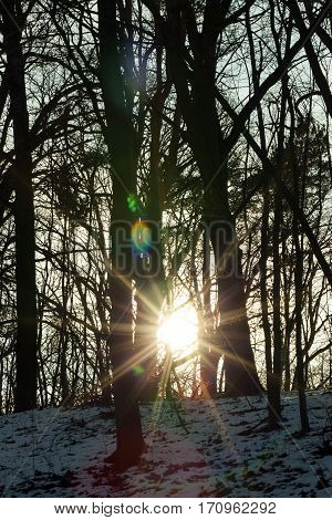 tree and forest in the winter, during the dawn of the sun. Shallow depth of field, photo