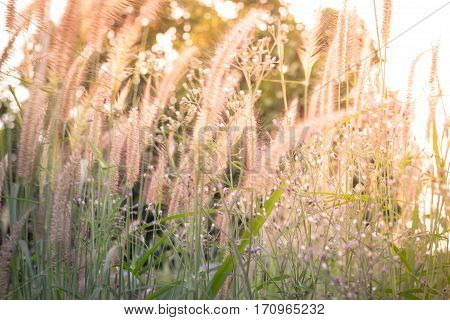 Grass field filled with sunlight stock photo
