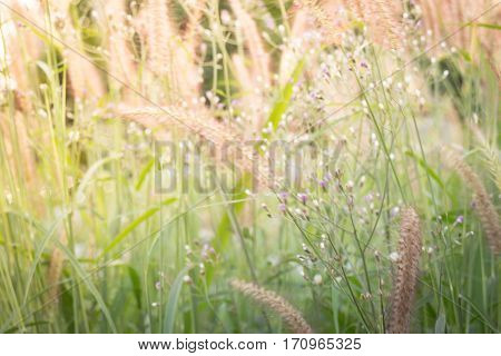 Morning in the grass field stock photo