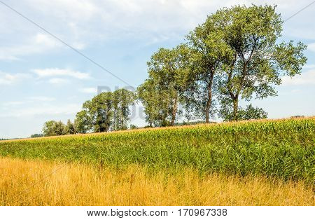 Rural landscape with trees and various types of plants in a variety of colors on a sunny day in the Dutch summer season.