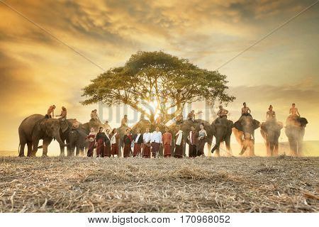 SURIN - JAN 7 : Surin ordination parade on elephant back festival at Hadsiao Temple,Si Satchanalai from JAN 7 ,Riding on elephant and Thai Puan ordination on JAN 7, 2016  in Surin.