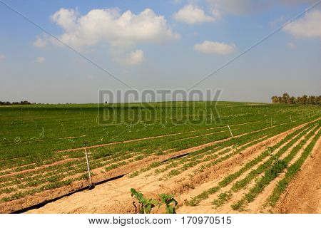 Farmer field in the south of Israel at spring