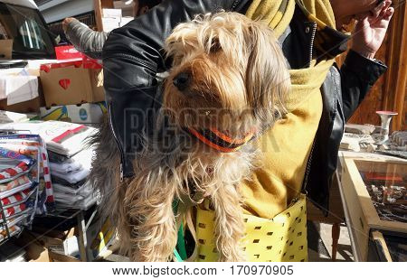 ROME ITALY - FEBRUARY 12 2017: woman carry a dog at the famous Flea market Porta Portese in the trendy Trastevere area